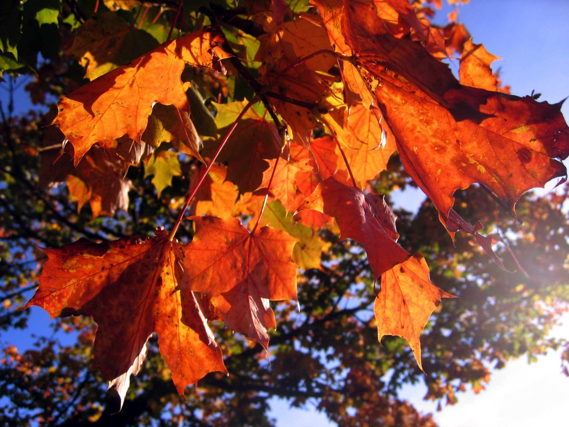 leaves-indian_summer_578903